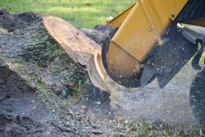 Closeup Stump Grinding